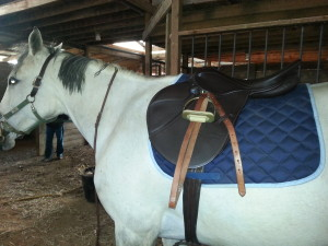 The new saddle! Misty is not impressed with the non-matching stirrup leathers. Gotta work on that.
