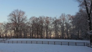 The view behind the barn...the ring and then back field up top.
